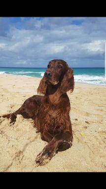 Greta de Villajambrina Playa Cuba 2
