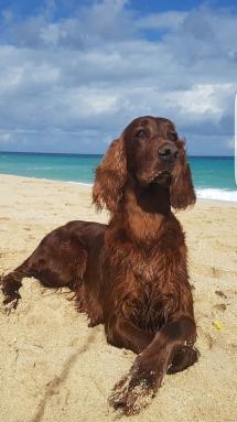 Greta de Villajamrbina Playa Cuba