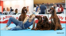 Exposicion_internacional_canina_talavera11