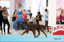 Exposicion_internacional_canina_talavera12