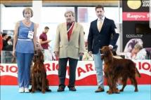 Exposicion_internacional_canina_talavera17