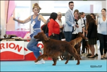 Exposicion_internacional_canina_talavera18
