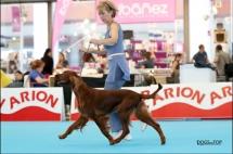 Exposicion_internacional_canina_talavera3