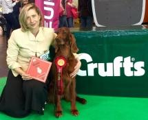 Greta_ganador_crufts_2016_setter Irlandes-1