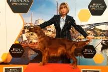 Jimena-de-Villajambrina-Exposicion-Canina-de-Porto